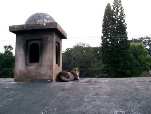 The Panza Verde Cat on the dome