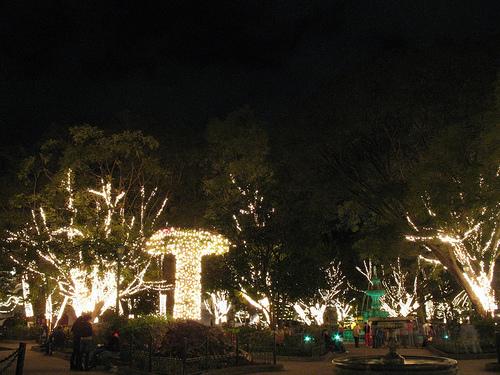 Illuminated trees at Parque Central, Antigua