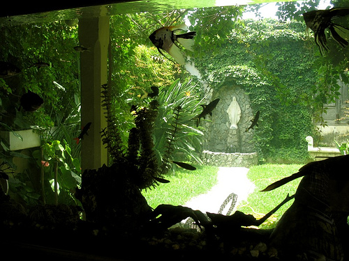 Fish Tank Window