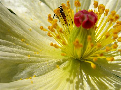 Flora y fauna trabajando juntas