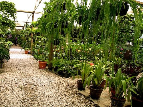 Guateflora: Colas de Quetzal and Vivero La Escalonia