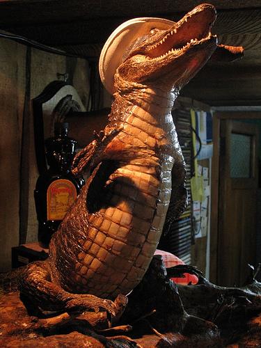 la naranja pelada - caimán