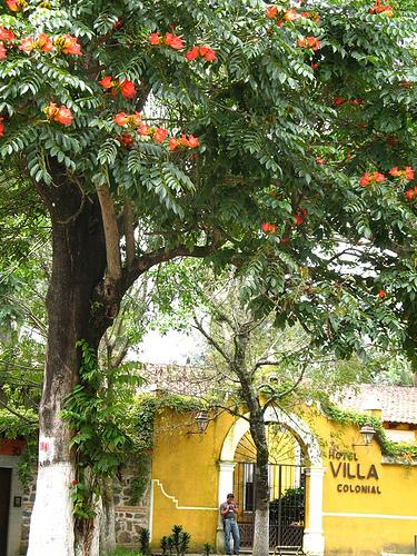 Guateflora: Llama del bosque