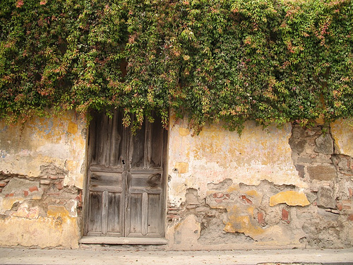 Guateflora: Falsa Uva (False Grape)