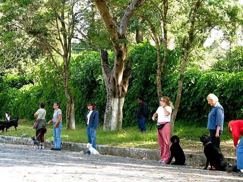 Dog School in Antigua