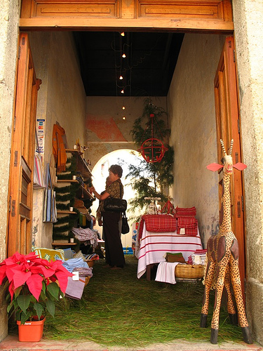 Poinsettias and Pine Needle are Christmas Decorations in Guatemala