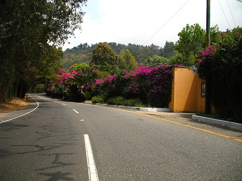 Bougainvillea-lined Road