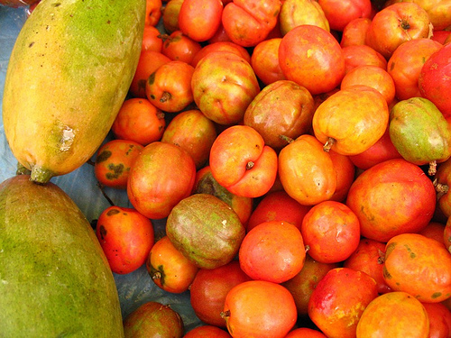 Guatemalan Mangos and Jocotes
