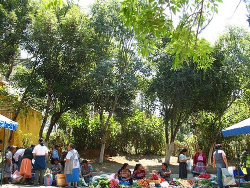 Fresh Produce at the Farmers' Fair