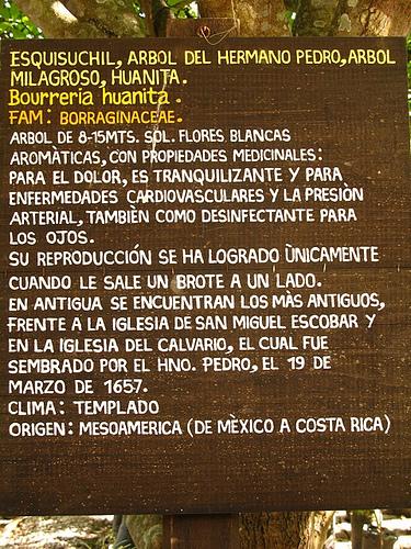 Esquisuchil Tree Sign at Vivero La Escalonia