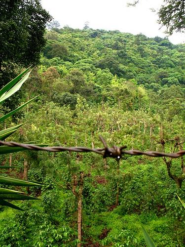 Green Hill Near La Ermita de La Santa Cruz
