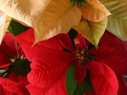 Guatemalan Christmas Decorations: Pascuas
