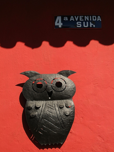 Antigua's Metallic Owl
