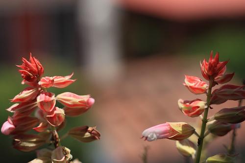 Jardín Antigüeño: Julias