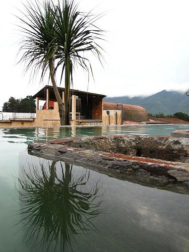 Palo de Izote Reflected