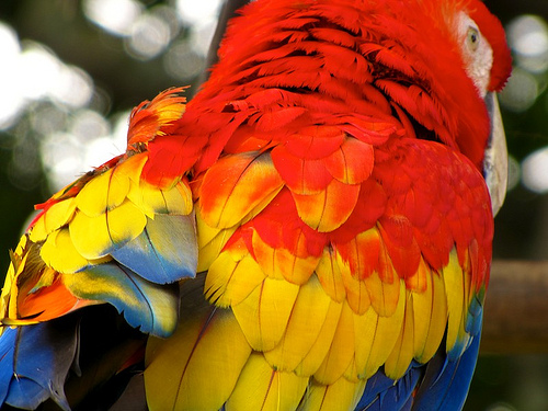Guacamaya's Brilliant Colours