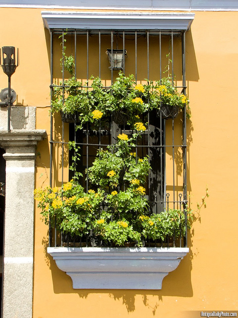 Window Gardens by Rudy Girón