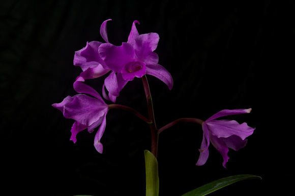 Rudy Giron: Flowers of Guatemala &emdash; Guatemala Is The Orchid Country