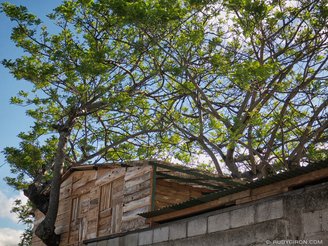 Rudy Giron: AntiguaDailyPhoto.com &emdash; Tree House from Antigua Guatemala