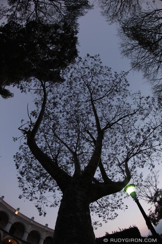 Rudy Giron: Antigua Guatemala &emdash; Tree Silhouettes from Antigua Guatemala's Main Square