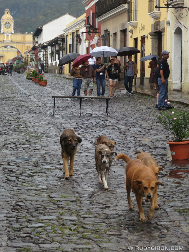 Rudy Giron: Antigua Guatemala &emdash; Pack of Street Dogs at Calle del Arco