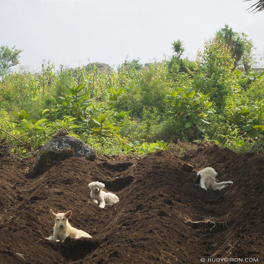 Rudy Giron: Antigua Guatemala &emdash; Cultivo de Perros