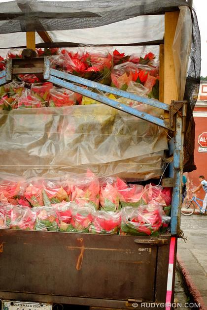 Rudy Giron: Antigua Guatemala &emdash; Poinsettias Deliveries