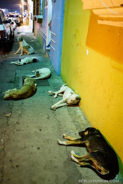 Rudy Giron: Antigua Guatemala &emdash; Pack of chuchos in Antigua Guatemala